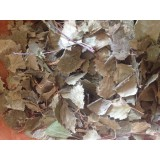 Bouleau ( feuilles )