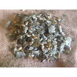 Dream Herb ( Calea zacatechichi )