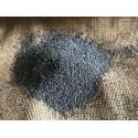 pavot bleu graine